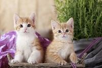 籠に入る二匹の子猫