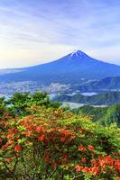 山梨県 ヤマツツジ咲く新道峠より富士山