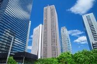 東京都 新緑の新宿ビル群