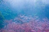鹿児島県 霧島連山