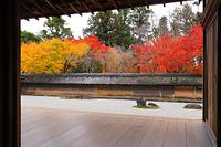 京都 龍安寺 方丈の石庭と紅葉