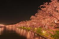 青森県 桜と弘前公園 西濠 夜景