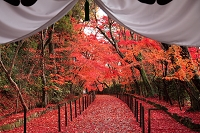 京都府 西山 光明寺
