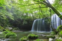 熊本県 新緑の鍋ヶ滝