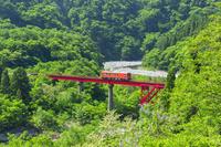福井県 春の越美北線