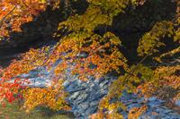 秋の高野川