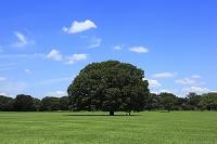 草原と大ケヤキ