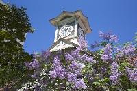 北海道 時計台