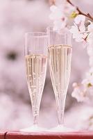 シャンパンと桜