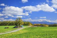 北海道 ビート畑と大雪山