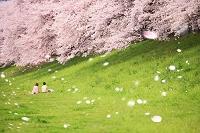 桜並木の土手に座るカップル