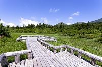 青森県 睡蓮沼からの八甲田連峰