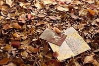 落ち葉の上にポストカード