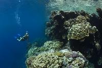 エジプト ダイバーと珊瑚礁