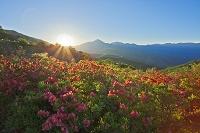 長野県 霧ヶ峰の朝 車山高原のレンゲツツジと八ヶ岳蓼科山
