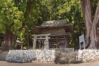 山梨県 武田八幡宮 石鳥居付正面石垣と総門と大スギ