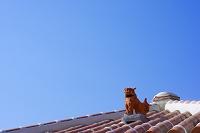 屋根の上のシーサー 沖縄県