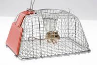 ネズミ捕りとネズミ
