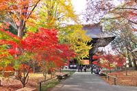 東京都 浄真寺の紅葉と仁王門