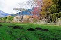 栃木県 牧草地とモグラの土盛り