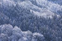 長野県 雪景色里山