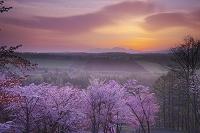 北海道 深山峠の朝の桜と大雪山