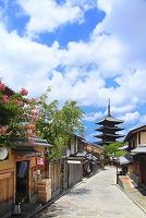 京都府 百日紅咲く八坂道と八坂の塔