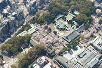 東京都 千代田区 靖国神社の桜