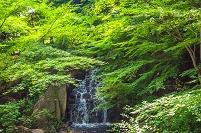 愛知県 名古屋市 徳川園庭園