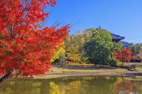 奈良県 紅葉の大仏池と東大寺 大仏殿 奈良公園