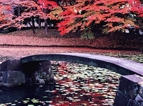 東京都 秋の小石川後楽園