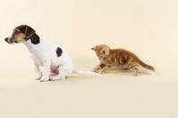 可愛い子猫と犬