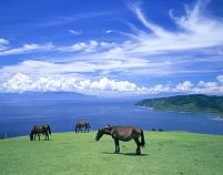 都井岬と野生馬