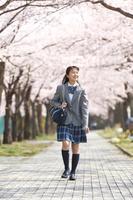 桜並木の下を歩く女子中学生