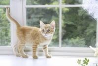 窓辺でたたずむ子猫