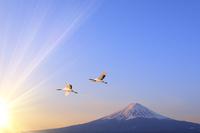 山梨県 朝日に染まる富士山と空飛ぶ丹頂