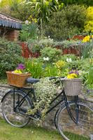 自転車と花壇