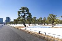 東京都 雪の皇居外苑
