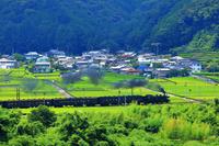 静岡県 大井川鉄道のSLと茶畑