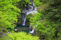 徳島県 新緑の大轟の滝