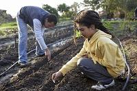 野菜畑で働く男性と女の子