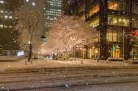 東京都 丸の内の雪景色
