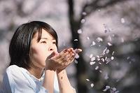 お花見する日本人女性