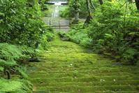 妙法寺(苔寺)