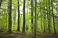 アメリカ アディロンダック・パーク 森にハイキングする人