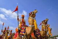 インド  祭り ラクダ