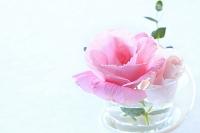 水差しに入れられたバラ