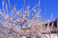 兵庫県 たつの市 世界の梅公園