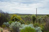 オーストラリア パース 不思議な植物の風景