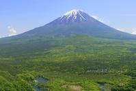 山梨県 富士山と新緑の裾野